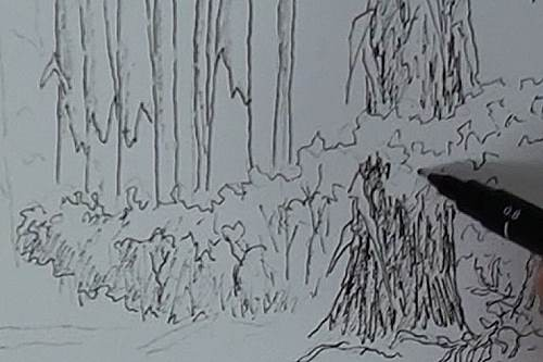 sketch the ground level shrubs for the painting of the bluegum trees in the forest in watercolor