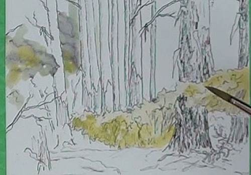 painting the focal point of the bluegum trees in the forest in watercolor