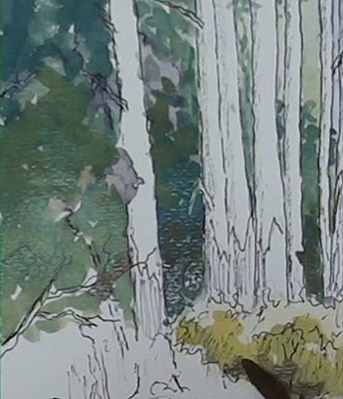 paint the shrubbery for the painting of bluegum trees in a forest in watercolor