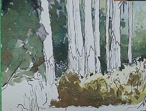 paint the deep shadows for the painting of the bluegum trees in a forest in watercolor