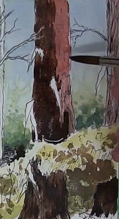 painting the main trees for the bluegum trees in the forest in watercolor