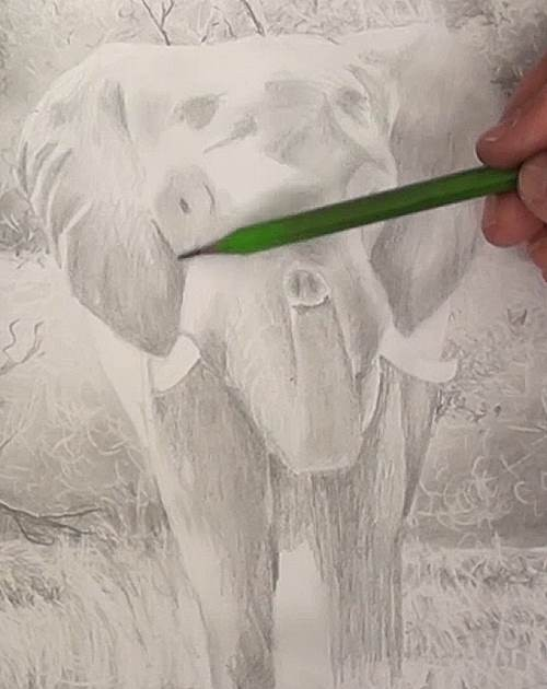 adding definition to the tonal values of the elephant pencil drawing