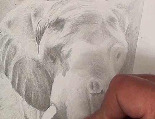 drawing the elephant's eye