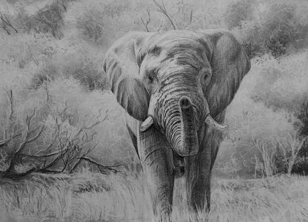 final drawing of the elephant