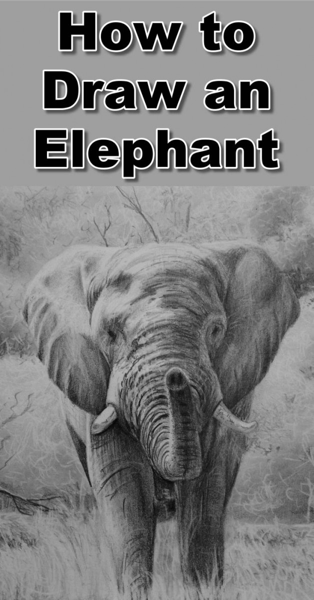 In this class we will draw a realistic elephant in the wild. During the class you will learn How to draw dense bush, How to draw leaves without having to draw each leaf, How to draw the elephant, How to create the rough hide effect, How to draw grass swaying in the wind