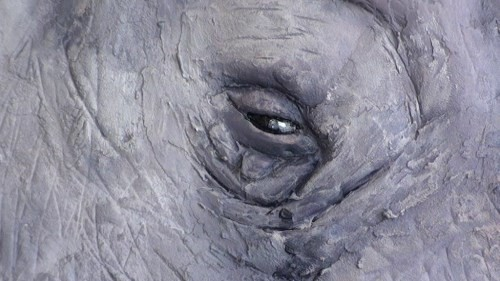 painting rhino's eye