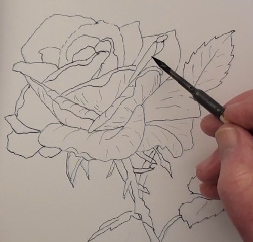 moulding the petals of the rose