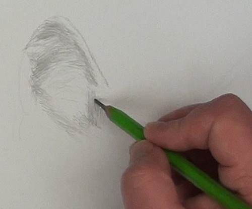 drawing the wolf's ear