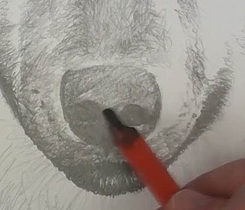 drawing the nostrils