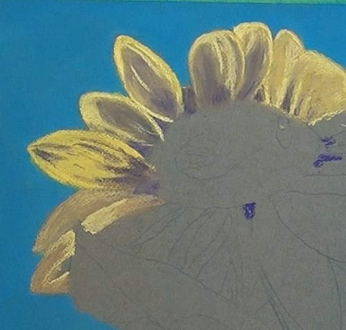 drawing shadows of the petals - sunflower in pastel