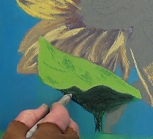 drawing the mian leaf - sunflower in pastel