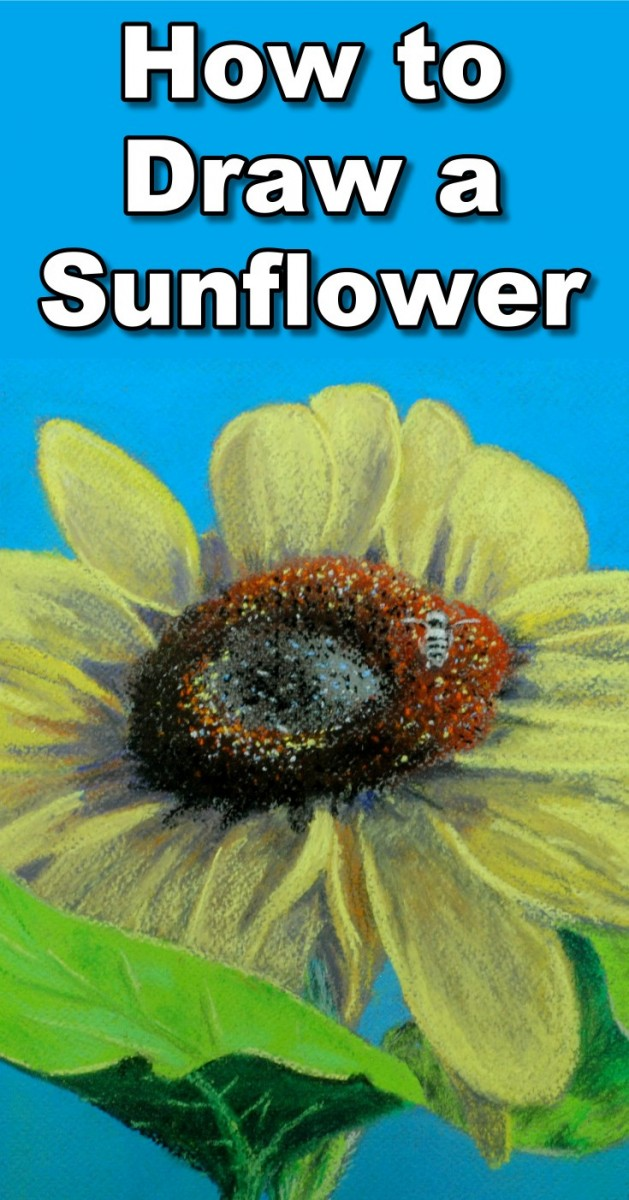 how to draw a sunflower in pastel