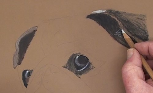 how-to-draw-a-pug-portrait-in-pastel-ears
