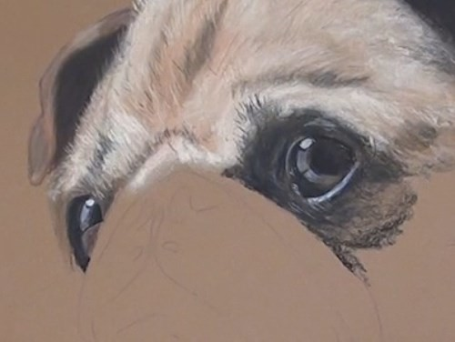 how-to-draw-a-pug-portrait-in-pastel-detail-eyes
