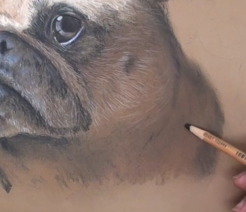 how-to-draw-a-pug-portrait-in-pastel-neck