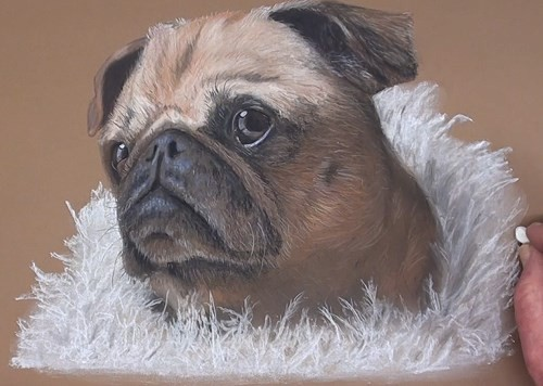 how-to-draw-a-pug-portrait-in-pastel-blanket