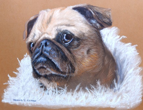 Final-drawing-pug-portrait-in-pastel