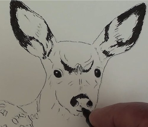 final-drawing-of-deer-in-pen-and-ink-eyes-ears-nose