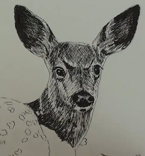 final-drawing-of-deer-in-pen-and-ink-neck