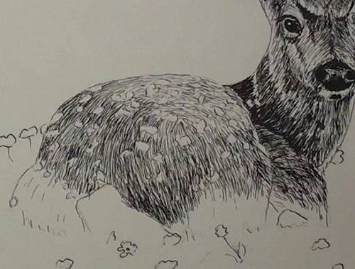 final-drawing-of-deer-in-pen-and-ink-main-body