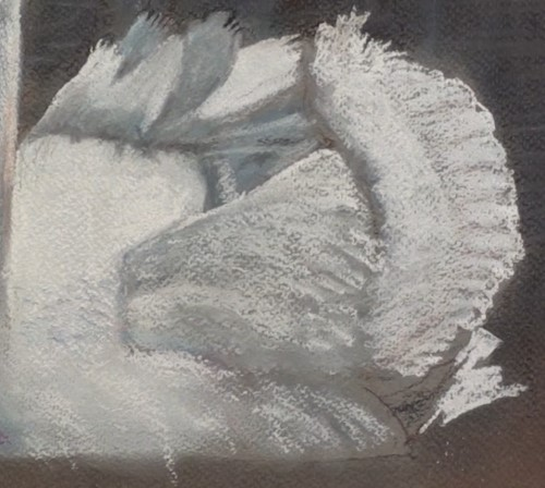 drawing-a-swan-in-pastel-wing