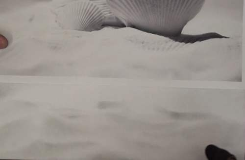 how-to-draw-seashells-in-pencil-sand-like-effect