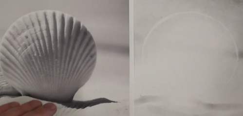 how-to-draw-seashells-in-pencil-outline-shell-eraser