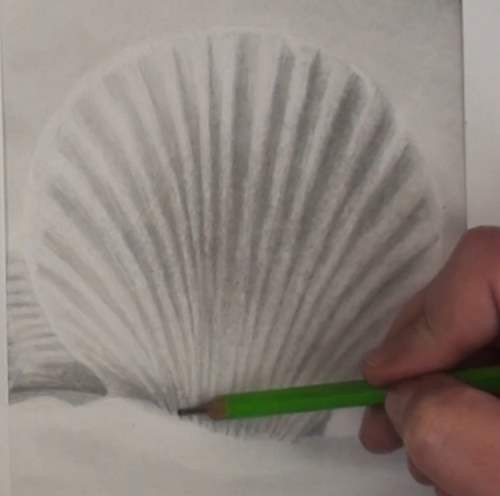how-to-draw-seashells-in-pencil-shading-ribs