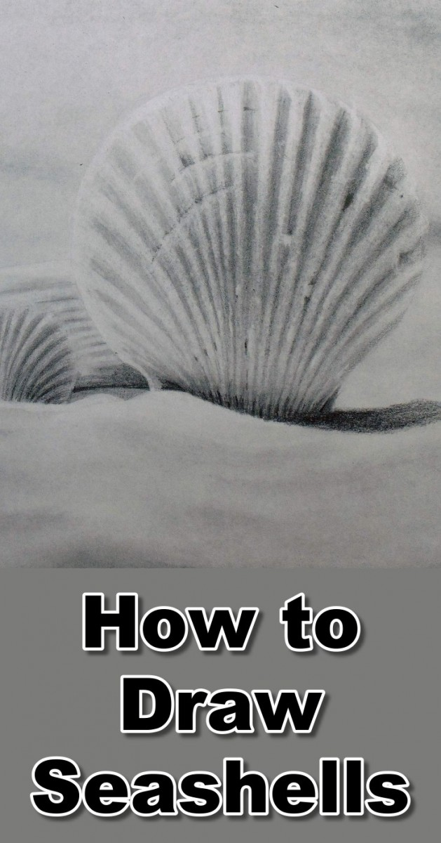 how-to-draw-seashells-in-pencil