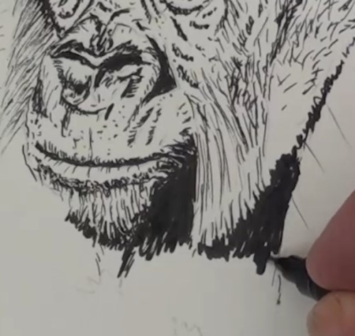 how-to-draw-a-gorilla-in-pen-and-ink-chin