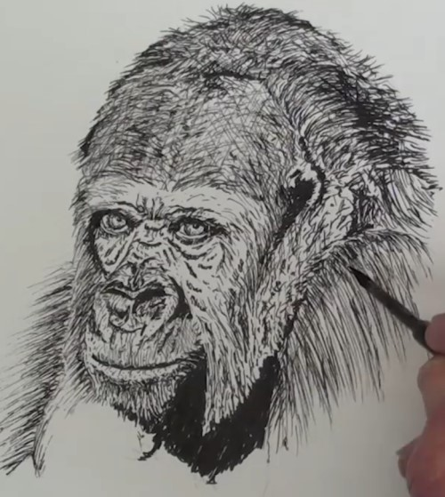 how-to-draw-a-gorilla-in-pen-and-ink-head-shading