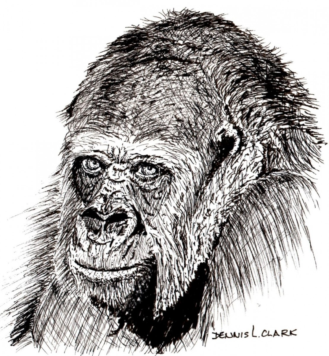 It's just a photo of Superb Drawing Of A Gorilla