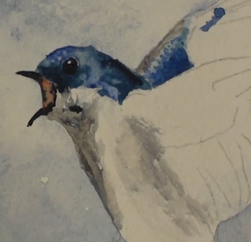 how-to-paint-two-swallows-in-watercolor-second-swallow