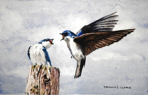 final-painting-two-swallows-in-watercolor-500