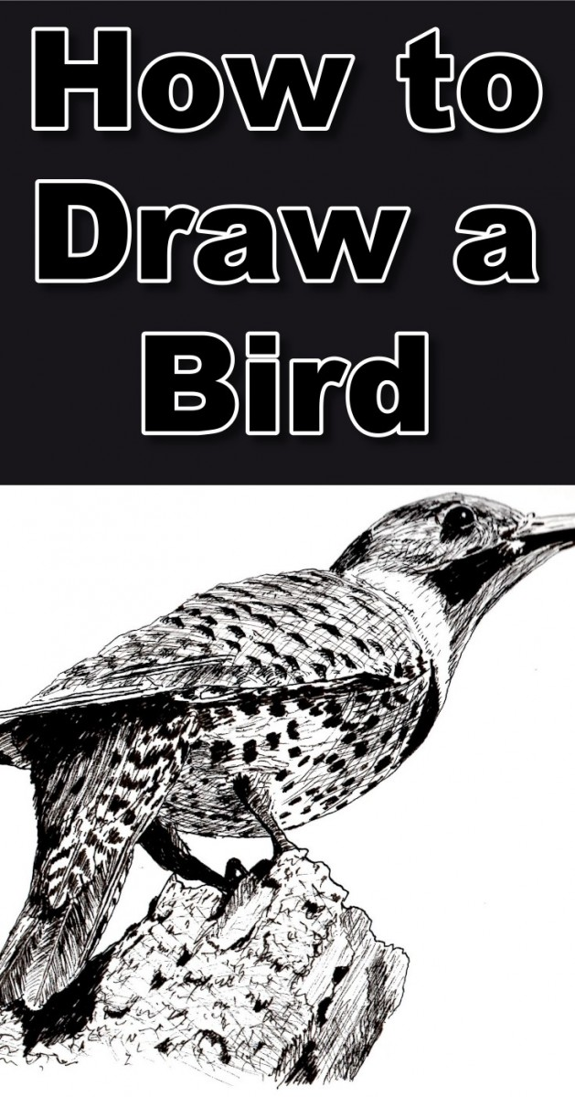how-to-draw-a-bird-in-pen-and-ink-pin
