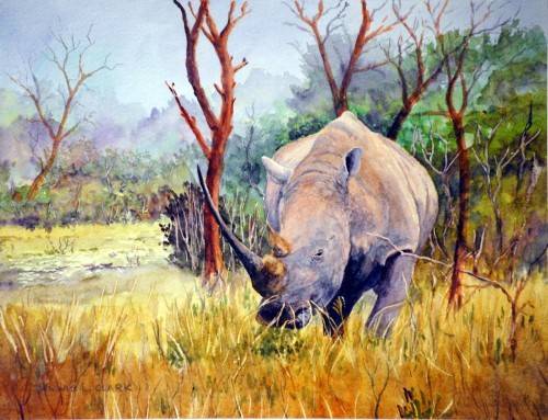 watercolor-rhino-final-artwork