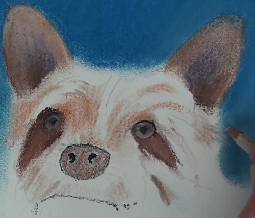 how-to-draw-a-dog-portrait-in-pastel-face-ears