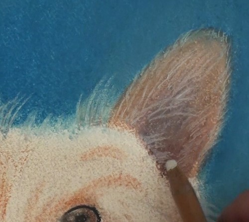 how-to-draw-a-dog-portrait-in-pastel-light-hairs-ear