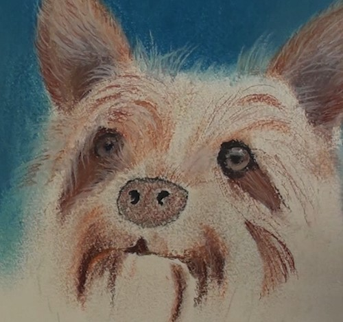 how-to-draw-a-dog-portrait-in-pastel-facial-hairs
