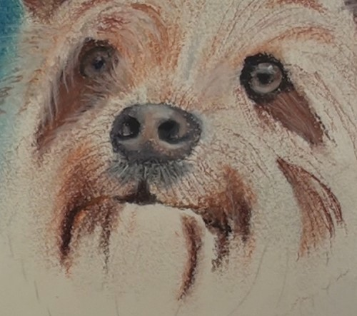 how-to-draw-a-dog-portrait-in-pastel-detail-nose