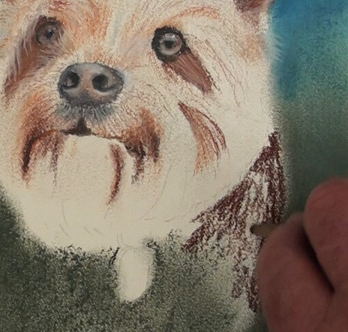 how-to-draw-a-dog-portrait-in-pastel-neck-area