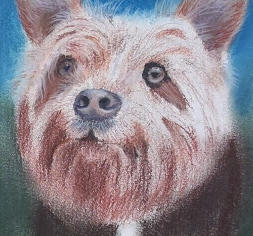 how-to-draw-a-dog-portrait-in-pastel-detail-face
