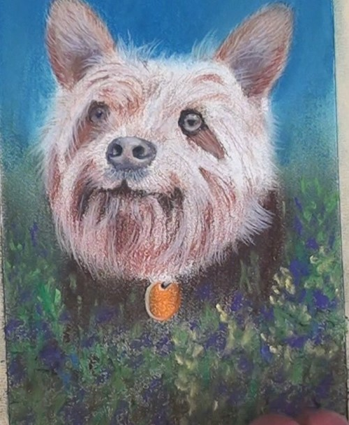 how-to-draw-a-dog-portrait-in-pastel-foreground
