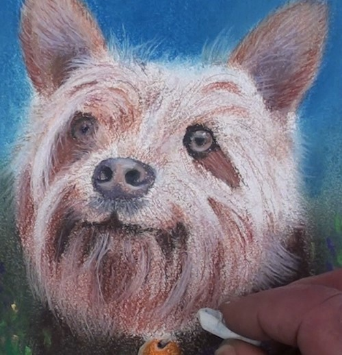 how-to-draw-a-dog-portrait-in-pastel-white-hairs-complete-face