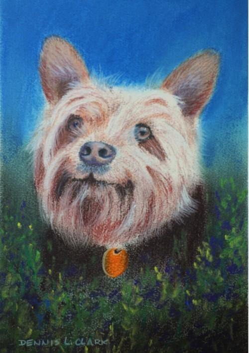 final-drawing-dog-portrait-in-pastel