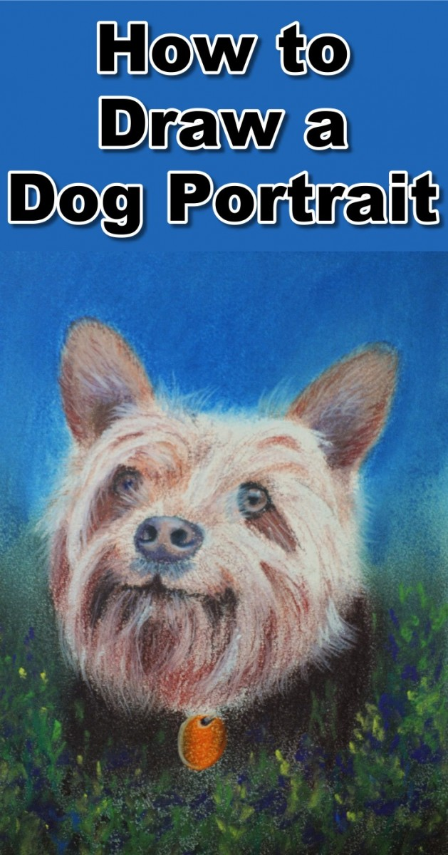 how-to-draw-a-dog-portrait-in-pastel-pin