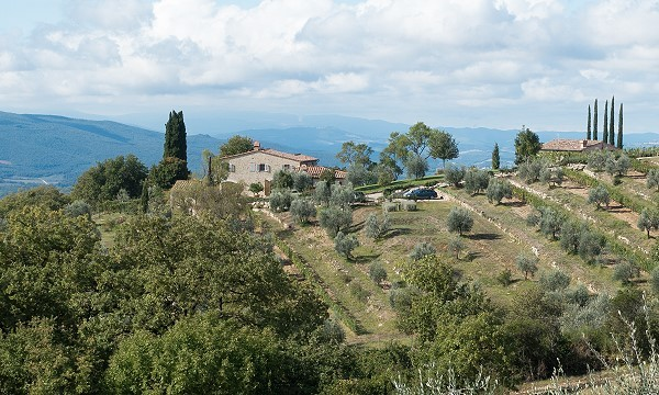 olive grove reference photo