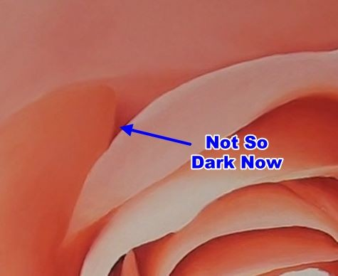 dark painted rose petal with another dark petal next to it