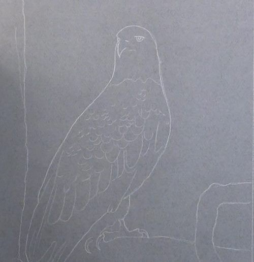 draw eagle onto pastel paper
