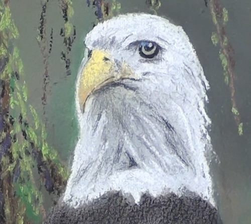 completed eagle head drawing